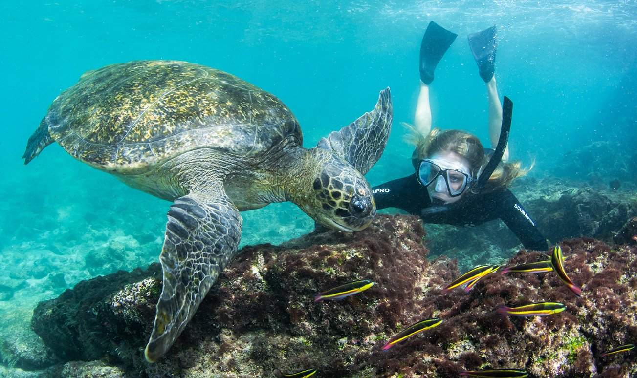galapagos turtle and girl diving