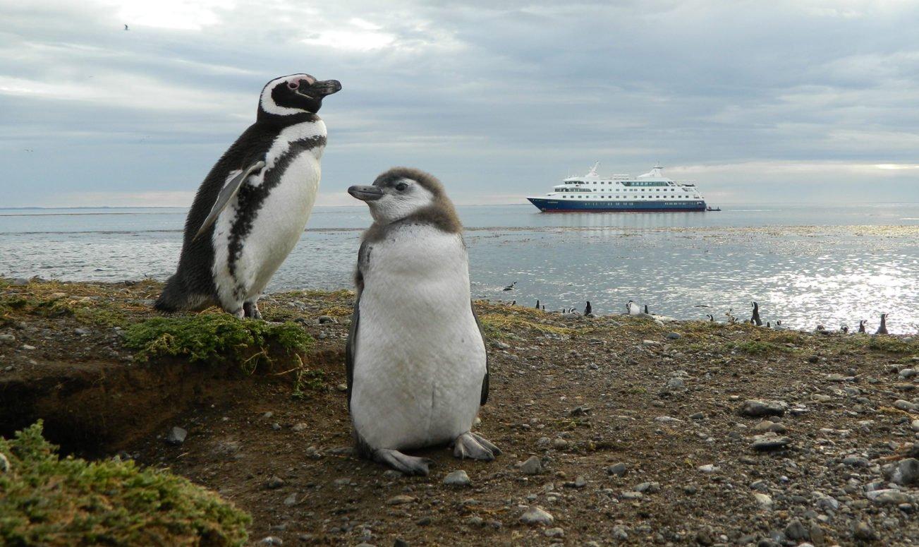Magdalena Island penguins
