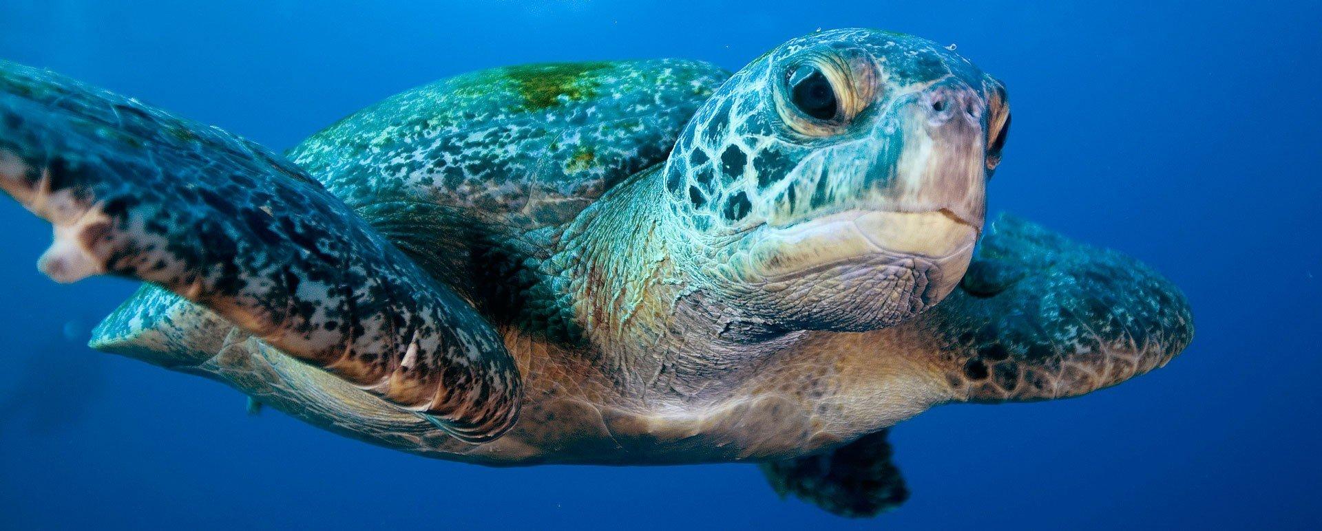 sea-turtle-1920x773