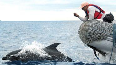 Panga & dolphins