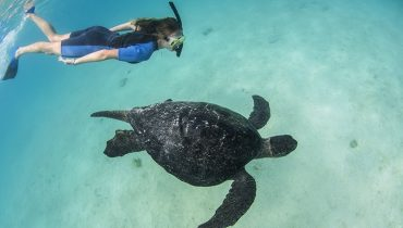 Model With Galapagos Green Turtle