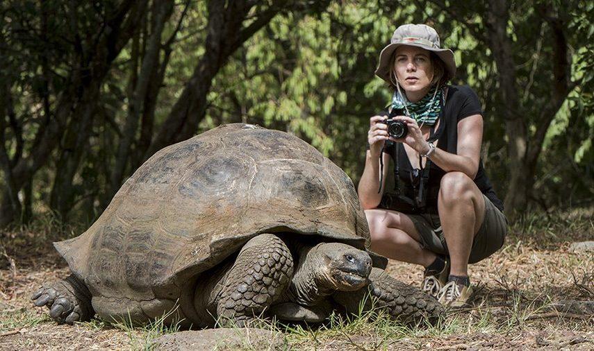 Tourist-and-Galapagos-giant-tortoise