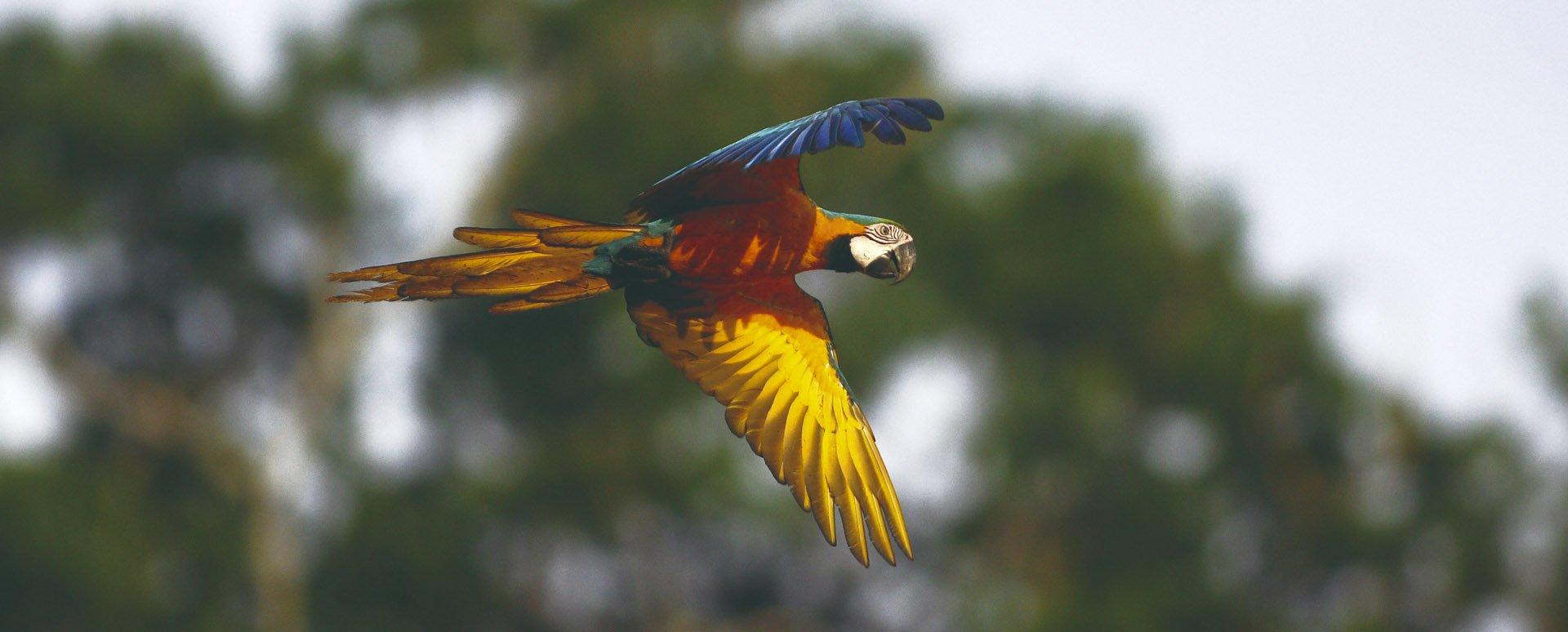 Reserva Amazonica bird