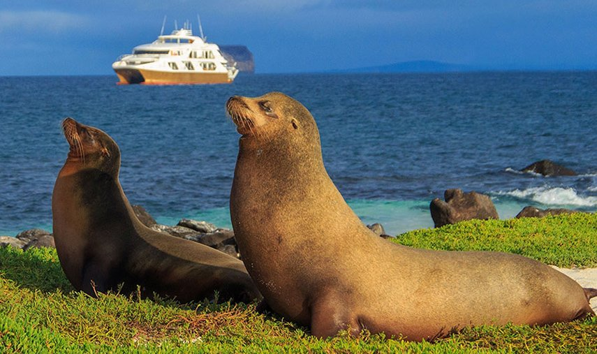 Elite Catamaran & Sea Lion